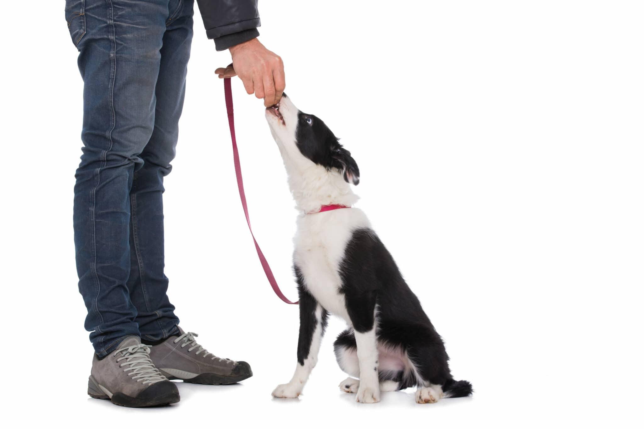 apprendre le assis à son chien