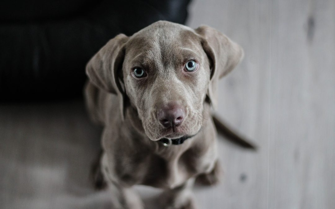 Comment bien choisir le prénom de son chien ?