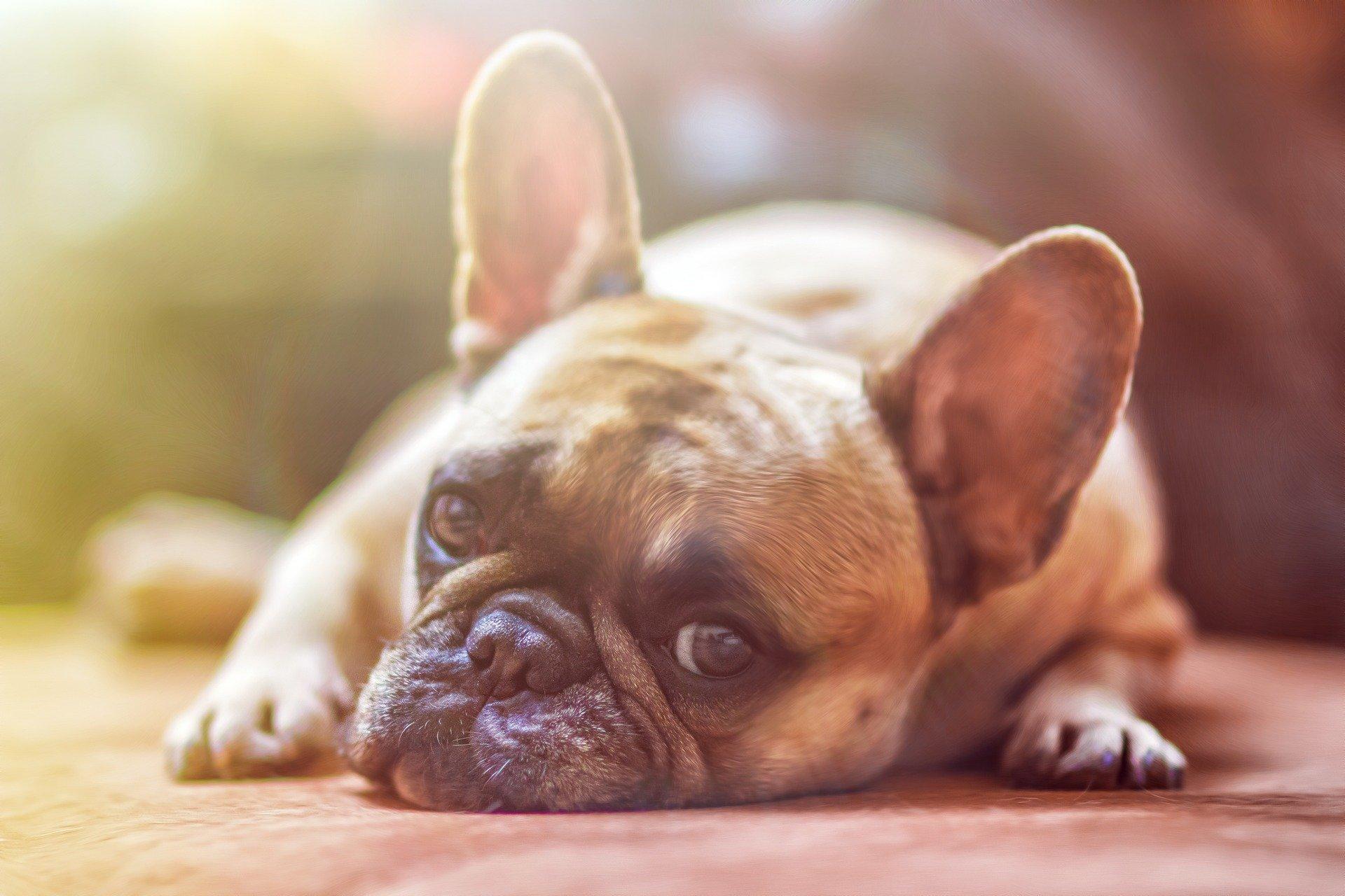 Éduquer son chien : pourquoi et comment faire ?