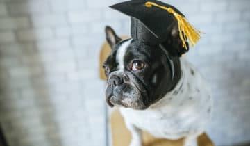 J'ai mon diplôme de moniteur en éducation canine 1er degré !