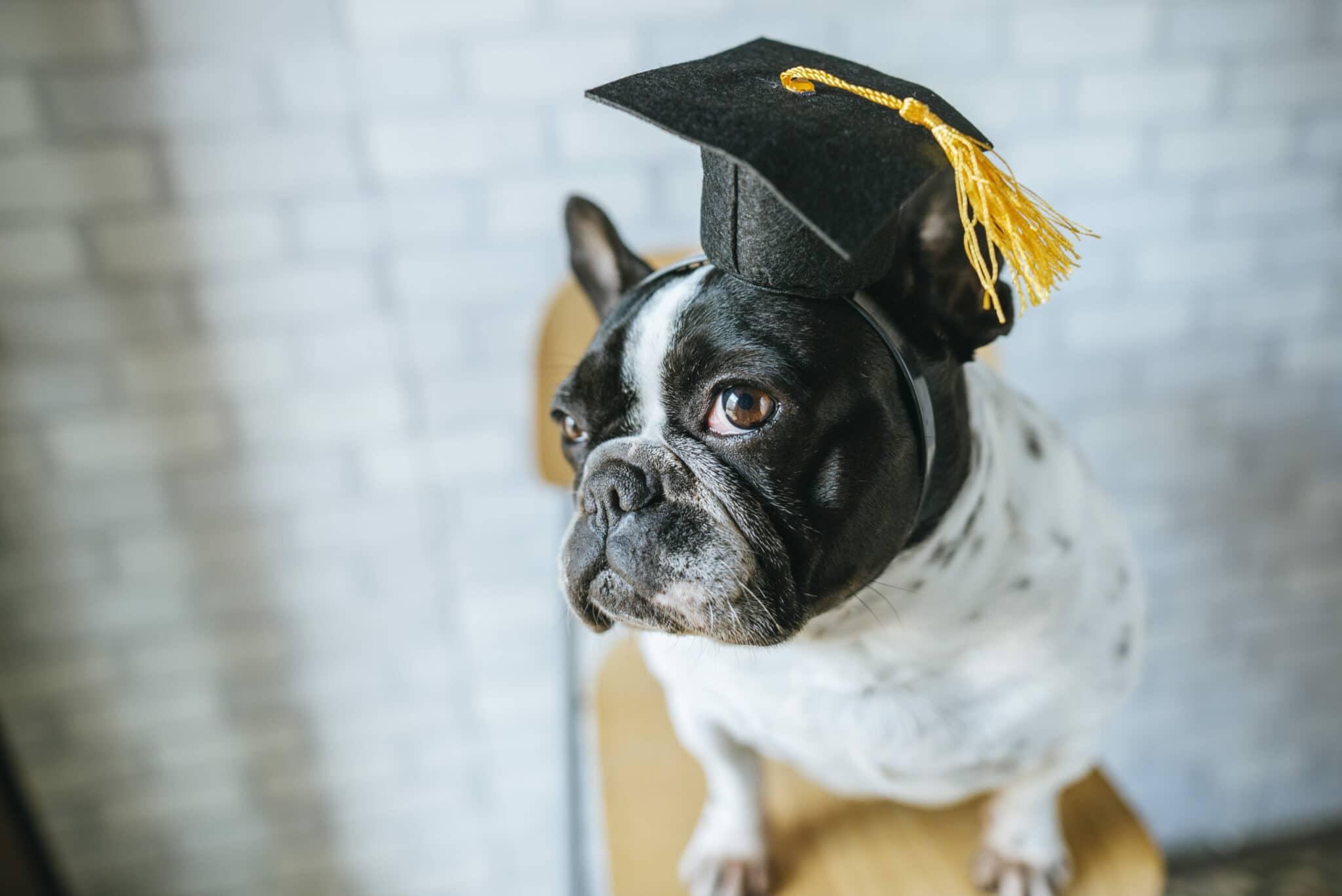 moniteur en éducation canine 1er degré