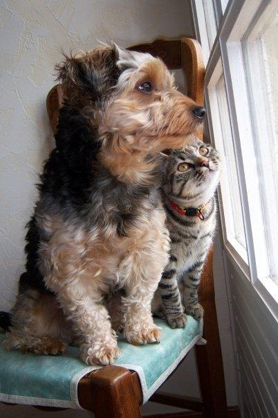 Le chiot et les autres animaux de la maison notamment le chat - Comment empecher un chat de gratter a la porte ...