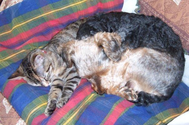 chat adulte et chiot zinnik