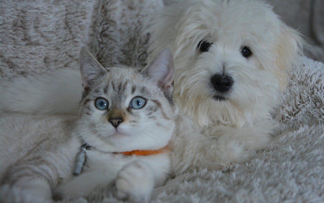 Le chiot et les autres animaux de la maison, notamment le chat