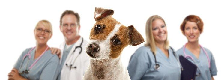 Avoir un chien c'est bon pour la santé !