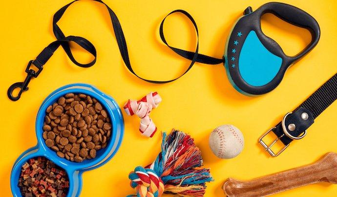 Top 10 des accessoires indispensables pour votre chien