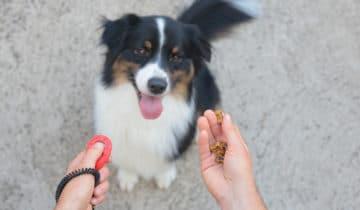 Qu'est-ce que le clicker training pour éduquer son chien ?