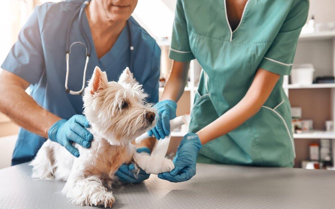 Comment avoir un chien calme chez le vétérinaire ?