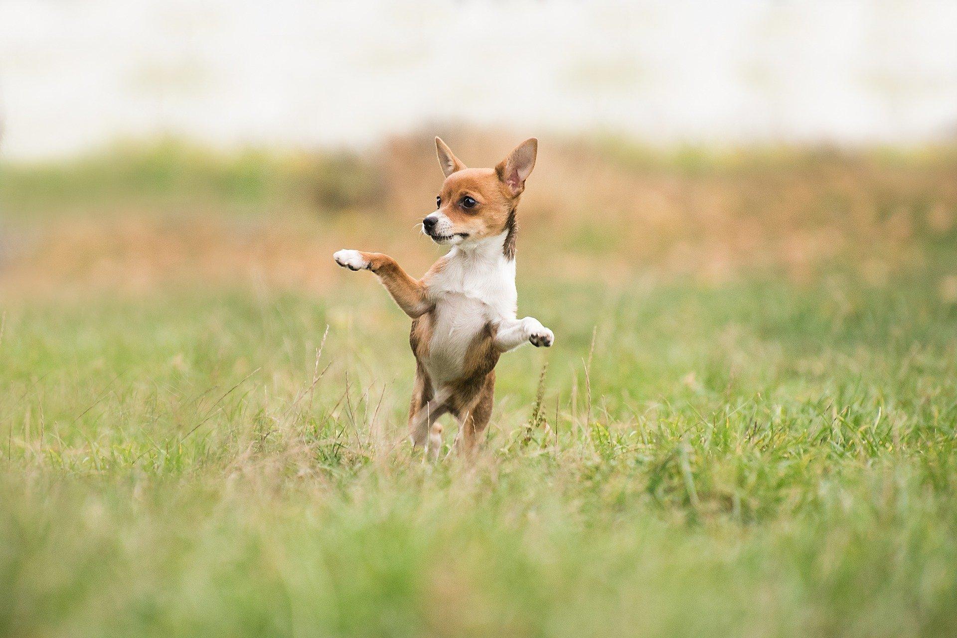 exercice avec son chien
