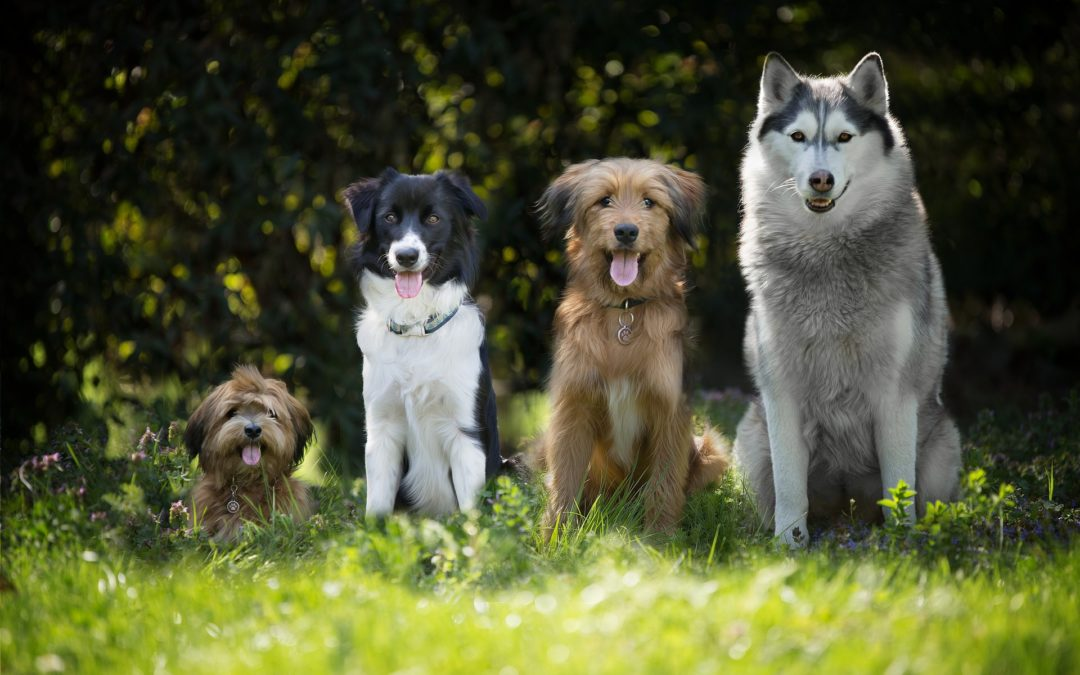 Les 7 plus grands mythes canins