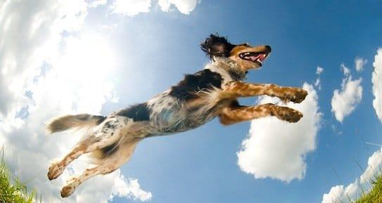 Le secret pour réaliser un bon exercice avec son chien