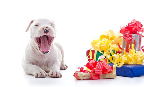 10 accessoires indispensables pour votre chien