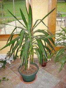 5 plantes toxiques pour votre chien - Plantes toxiques non toxiques chien chat ...