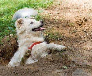 Mon chien creuse des trous dans le jardin que faire for Creuser un puits dans son jardin