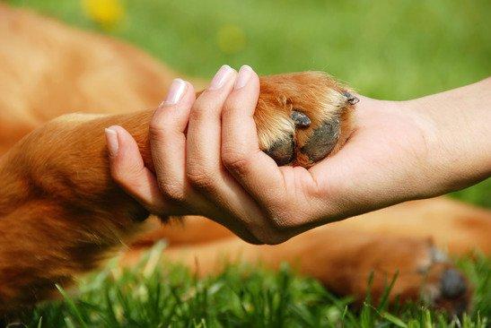 Pourquoi choisir le renforcement positif avec un chien ?