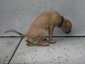 chien heureux qui urine