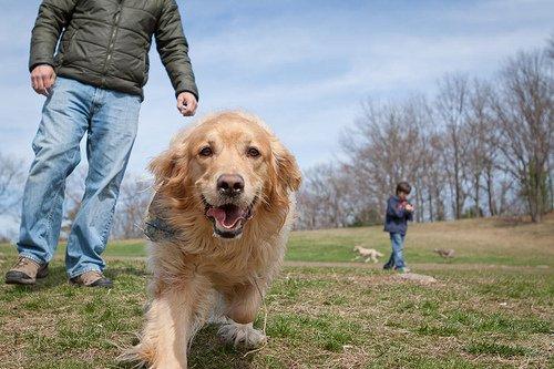 Mon chien urine quand il est heureux ! Que faire ?