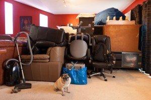 Le chien et le déménagement