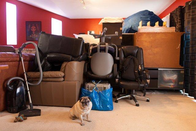 le d m nagement et le chien comment le pr parer sans stress. Black Bedroom Furniture Sets. Home Design Ideas