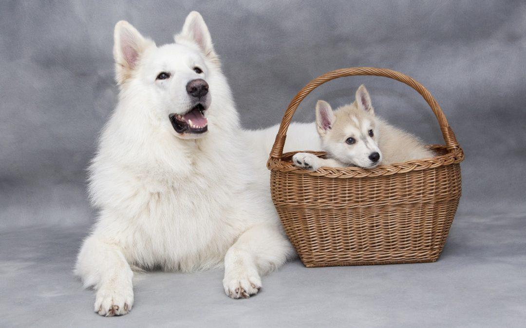 chien mâle ou femelle
