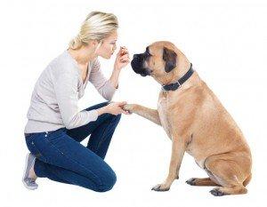 Apprendre le prénom à son chien