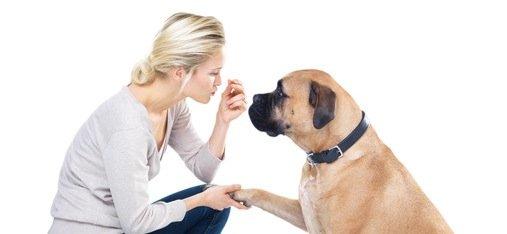 Comment apprendre le prénom à son chien ? 5 minutes chronos !