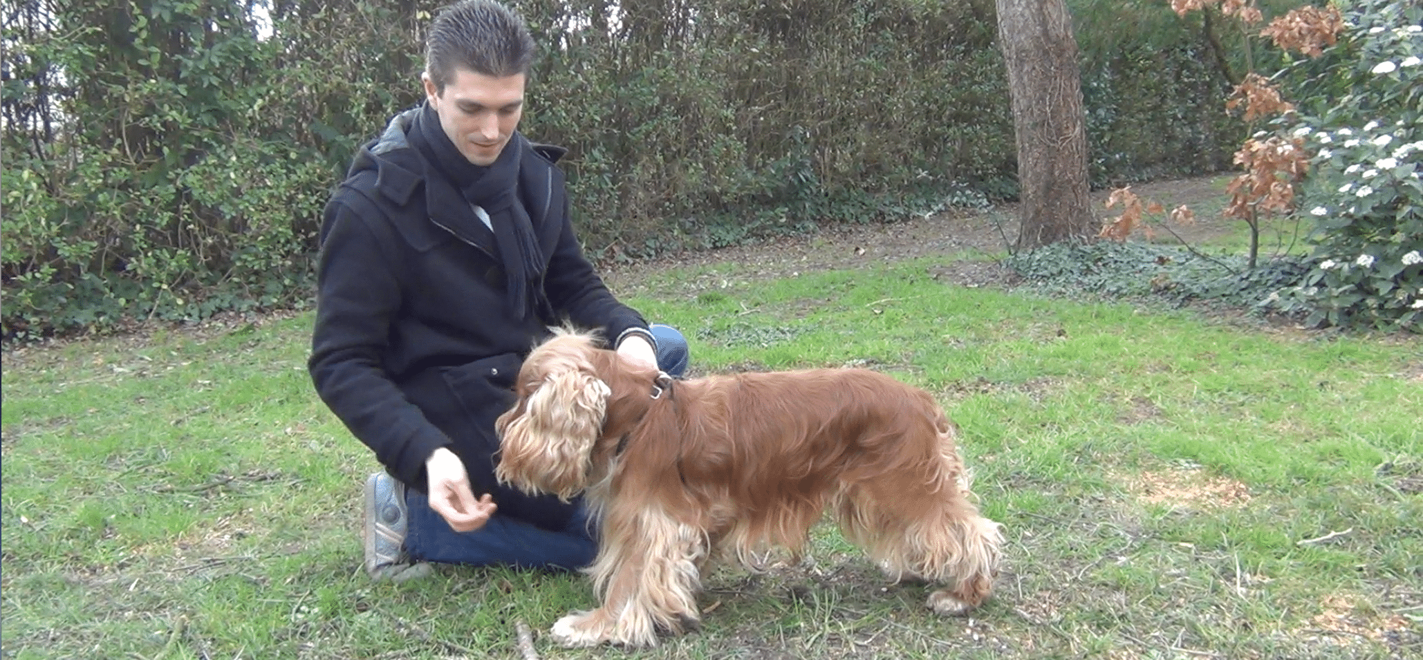 """[Vidéo] Comment apprendre l'ordre """"debout"""" à son chien ?"""