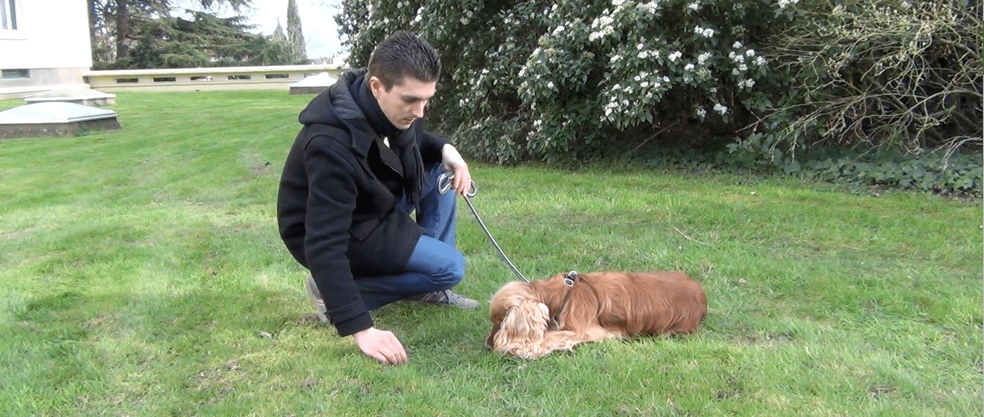 """[Vidéo] Comment apprendre le """"couché"""" à son chien ?"""