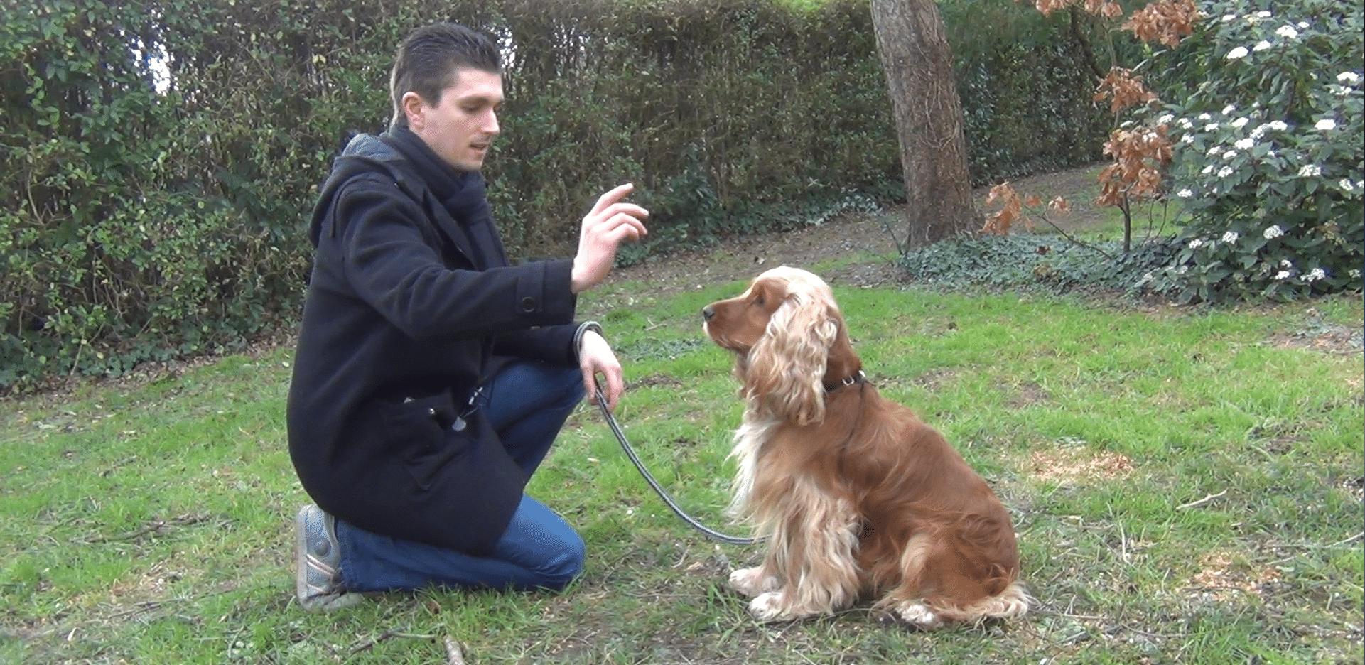 """[Vidéo] Apprendre le """"assis"""" à votre chien"""