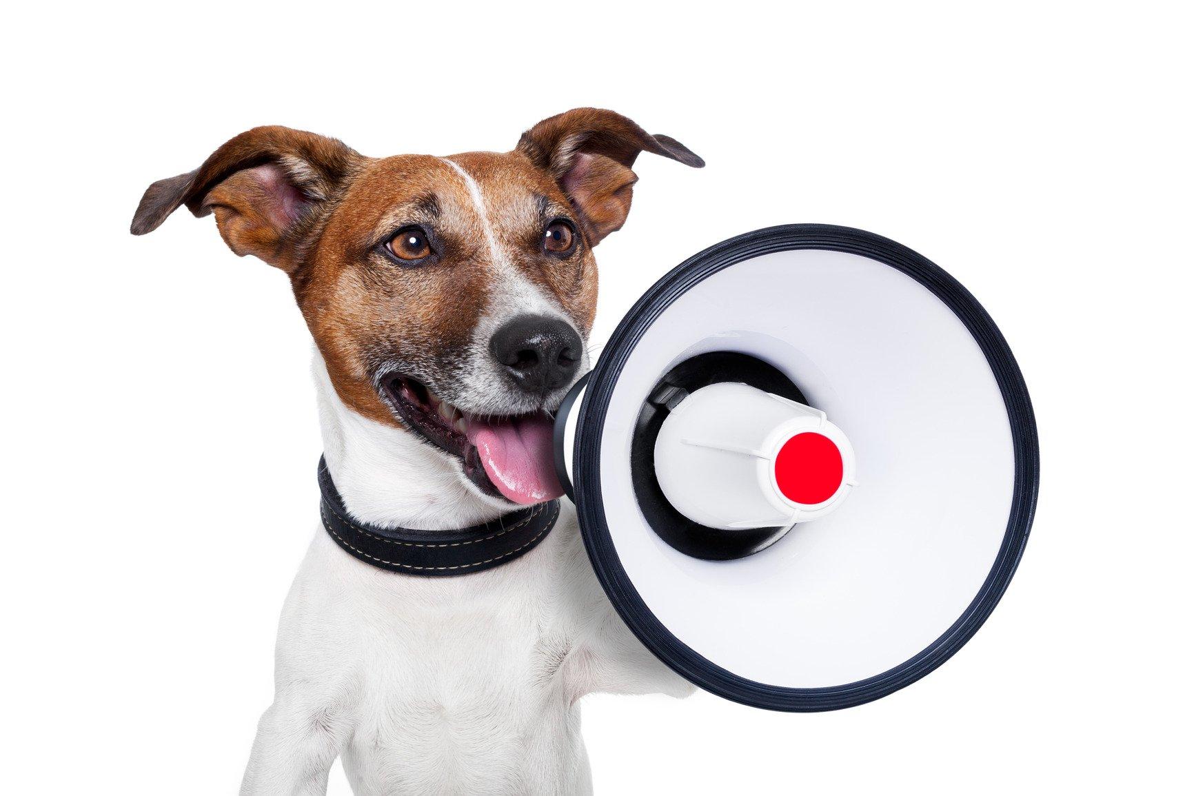 [Audio] Comment choisir le prénom de son chien?