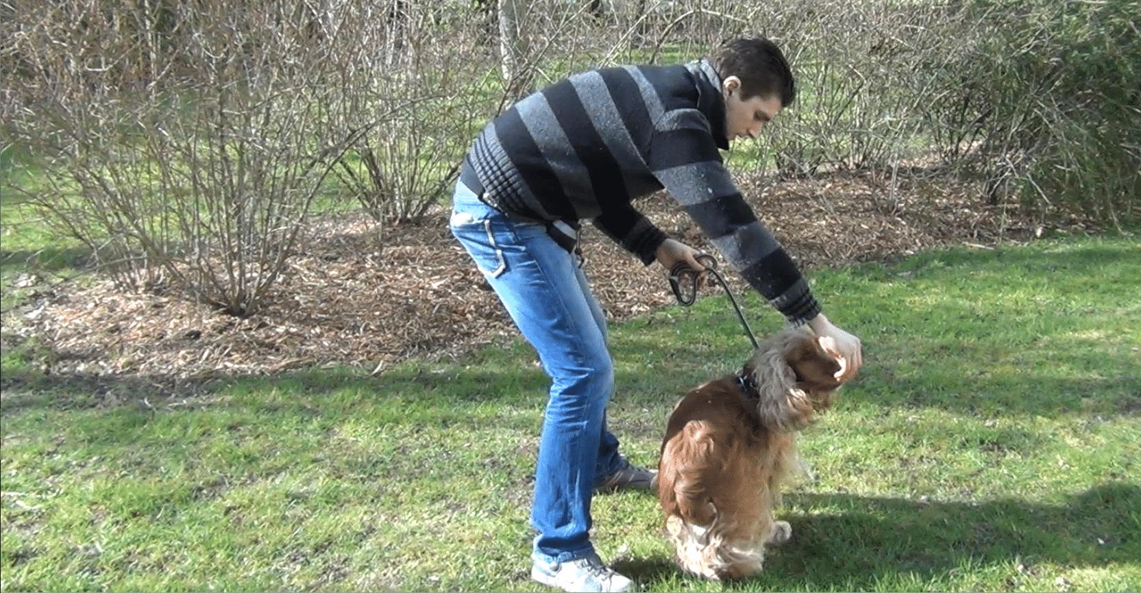 [Vidéo] Apprendre le tourne à son chien, rien de plus simple !