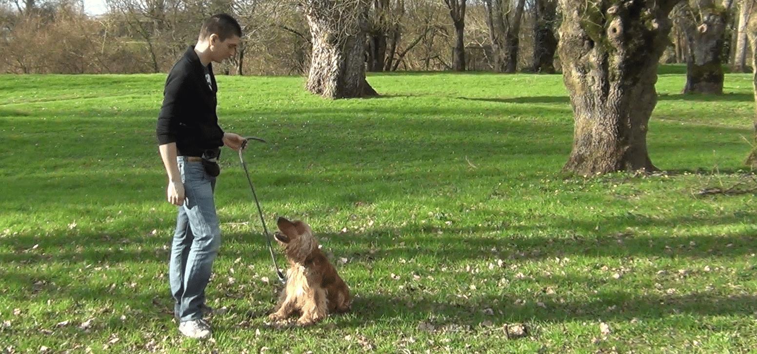 """[Vidéo] Comment apprendre l'ordre """"aboie"""" à son chien ?"""