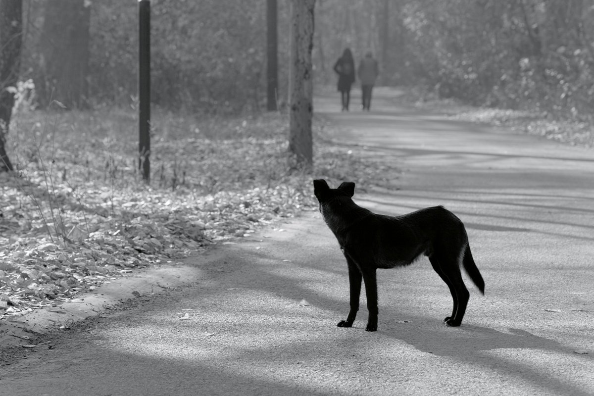 Mon chien à disparu, mon chien est perdu ! Que faire ?