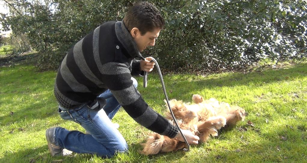 [Vidéo] Comment apprendre le «roulé boulé» à son chien ? Comme Adeck le Jack Russell.