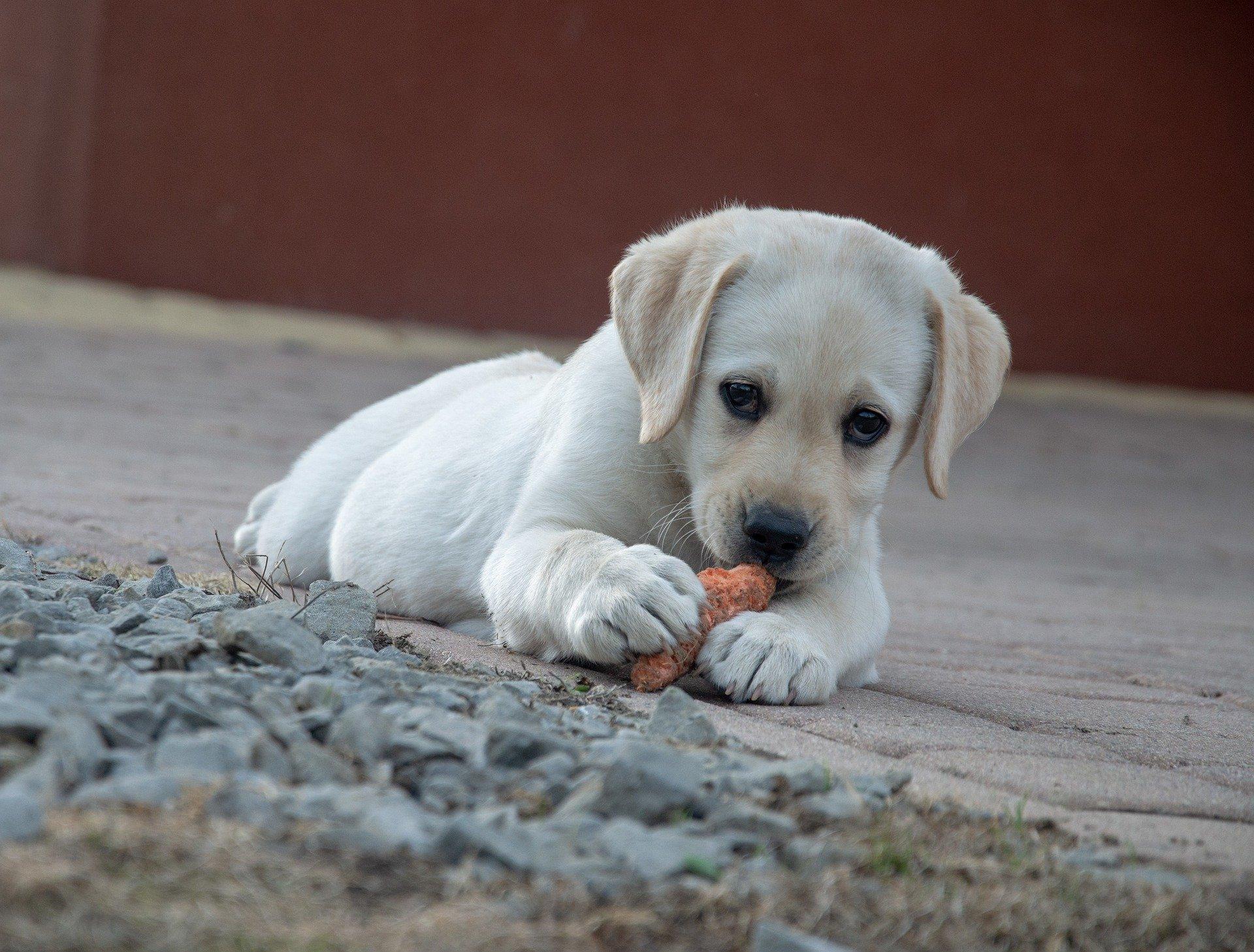 mon chien mange ses crottes
