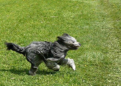 Mon chien a fugué, que faire ? Ayez les bons réflexes