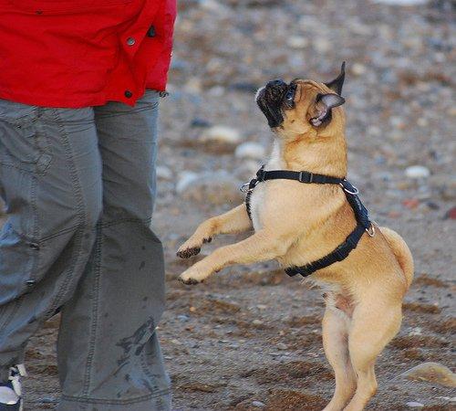 chien qui saute