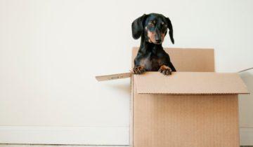 Chien et déménagement : comment gérer son stress ?