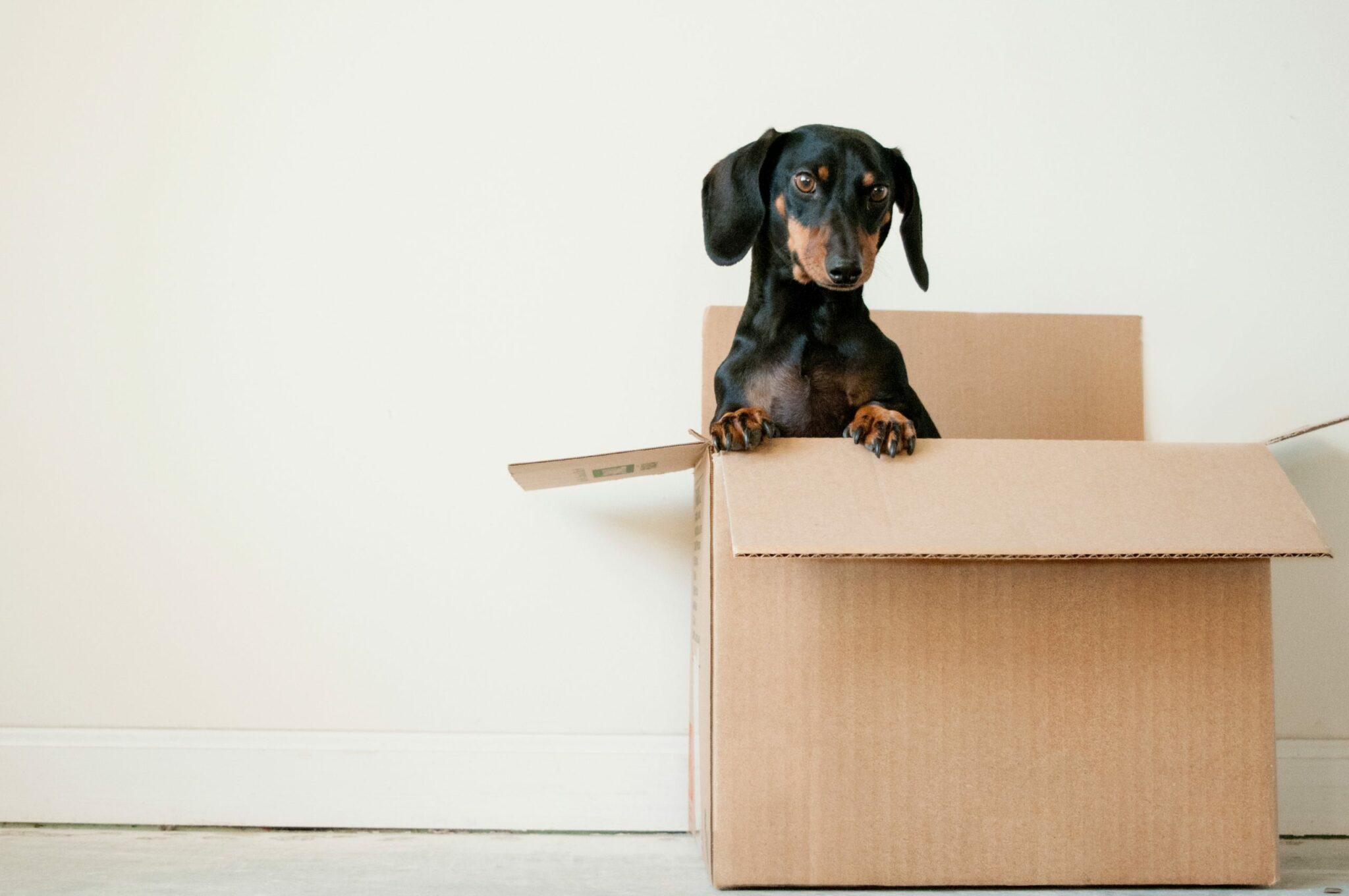 Chien et déménagement