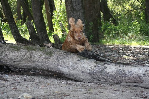 la fugue du chien