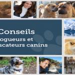 Eduquer son chien grâce à 33 conseils d'éducateurs et blogueurs canins