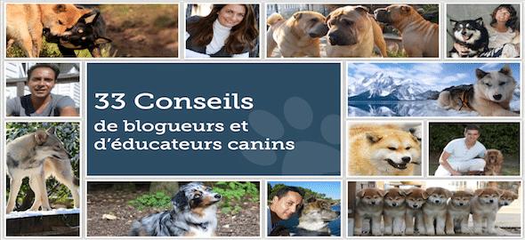 Eduquer son chien grâce à 33 conseils d'éducateurs et blogueurs canins. Et gratuitement !