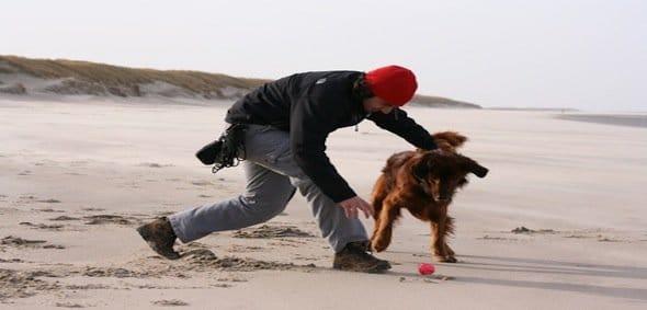 Comment faire garder son chien?