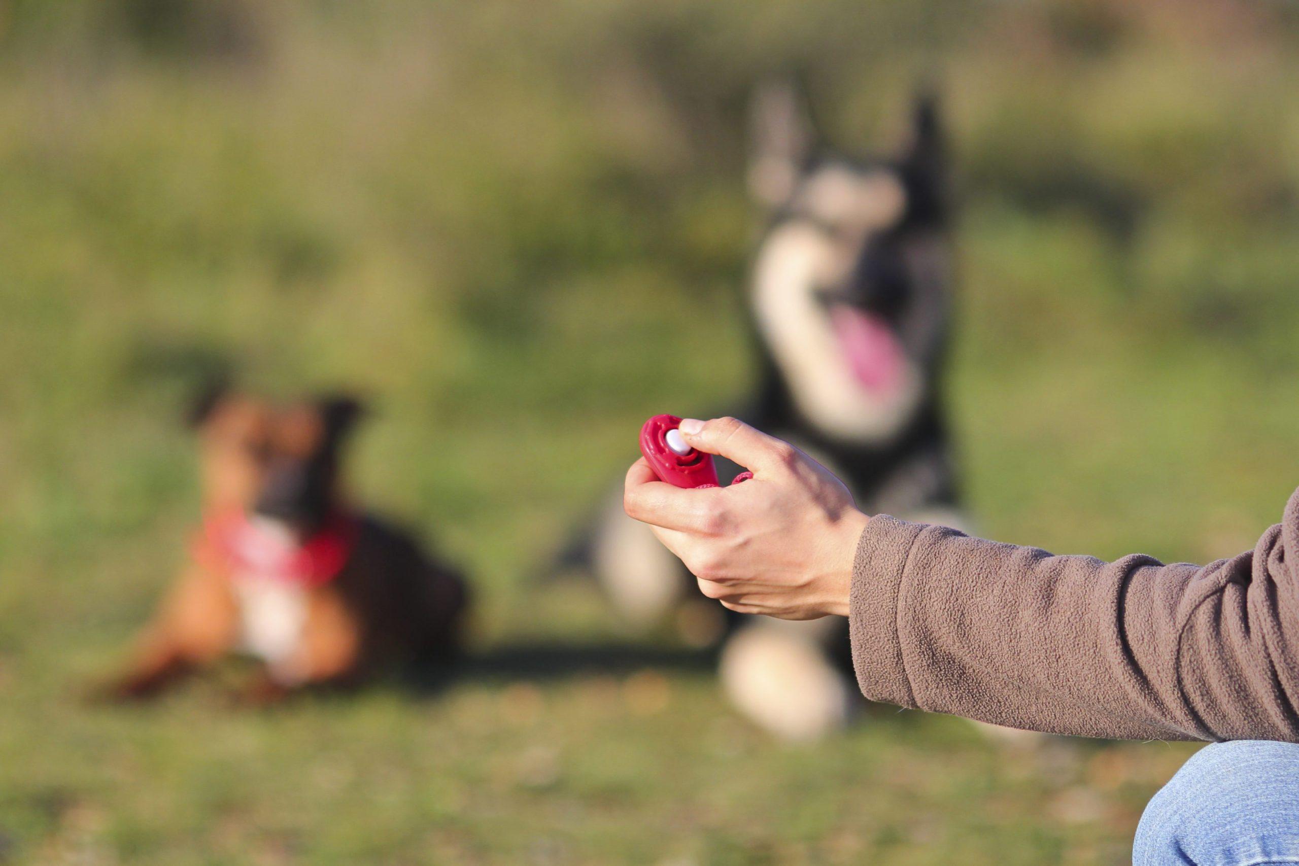 5 mythes/malentendus sur le clicker training