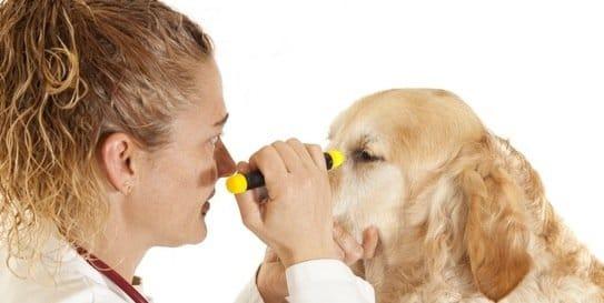 22 aliments qui peuvent TUER votre chien