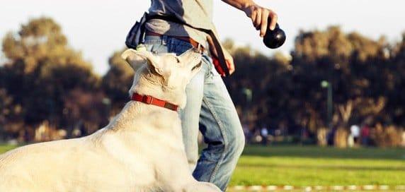 choisir éducateur canin