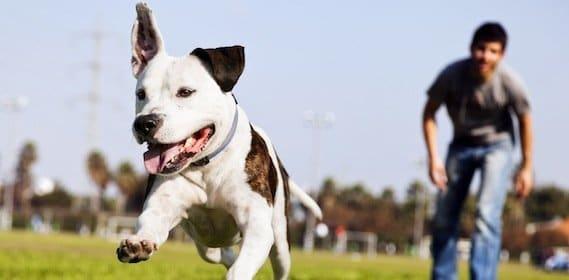 Comment devenir éducateur canin?