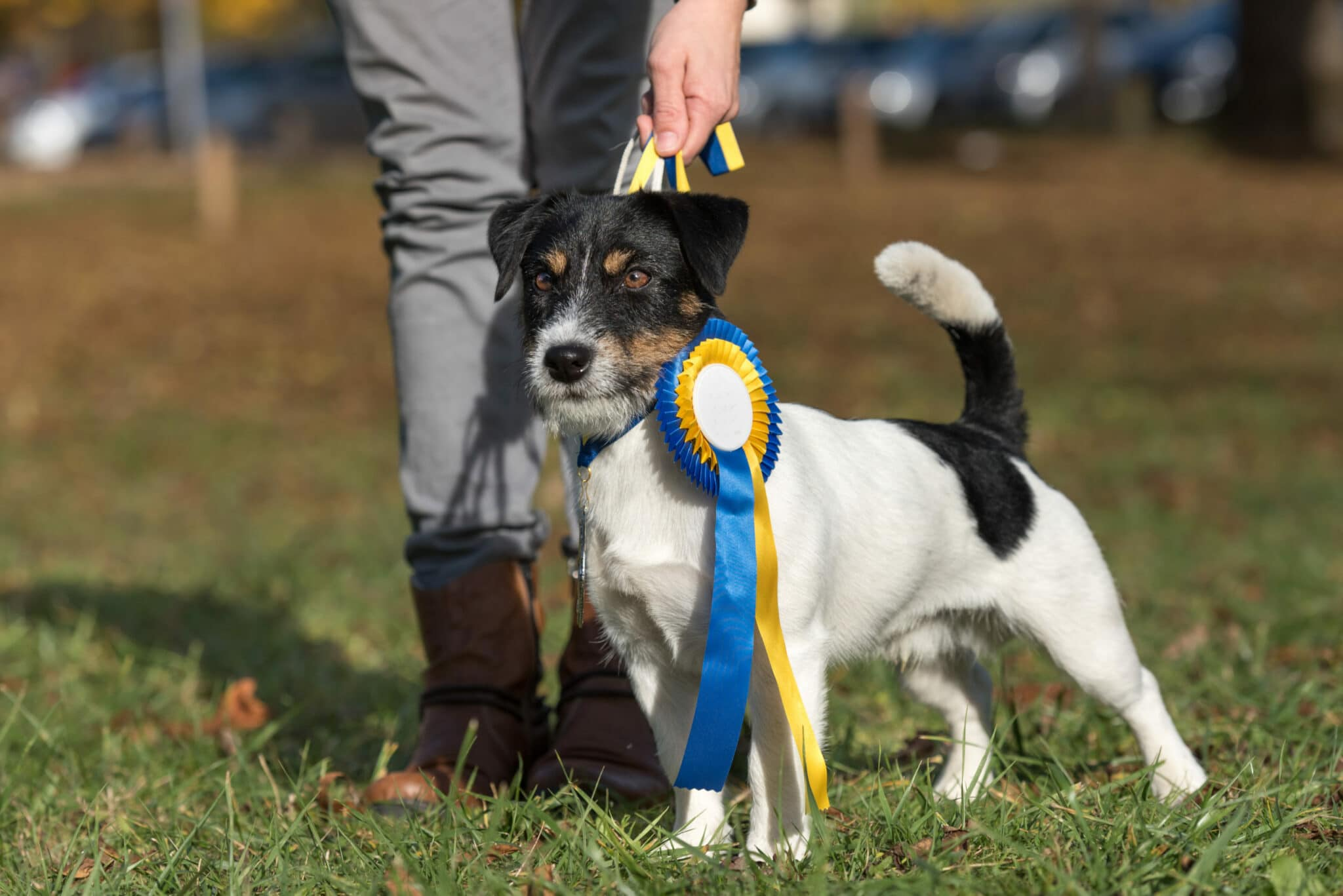 5 astuces pour bien choisir son élevage canin