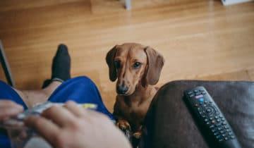 Comment empêcher son chien de quémander ?