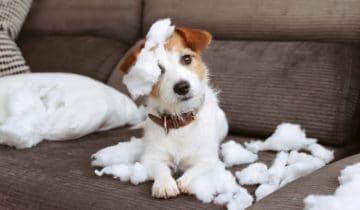 L'anxiété de séparation chez le chien, comment le soigner ?